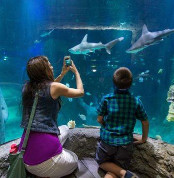 15 farklı türden 61 köpek balığına ev sahipliği yapan SEA LIFE İstanbul'u ziyaret edin, onların güçlerine şahit olun.
